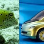 Deset aut, která vypadají jako ryba