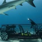 VW Beetle Cabriolet na pozorování žraloků